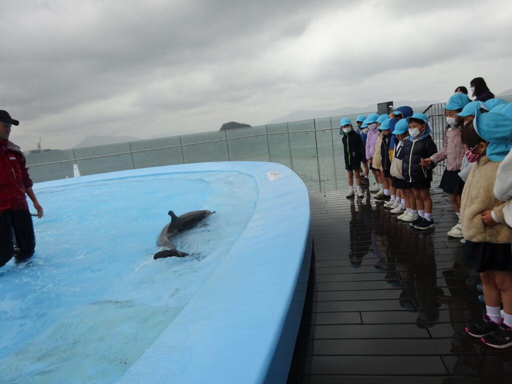 イルカが寄ってきてくれて嬉しいな♪