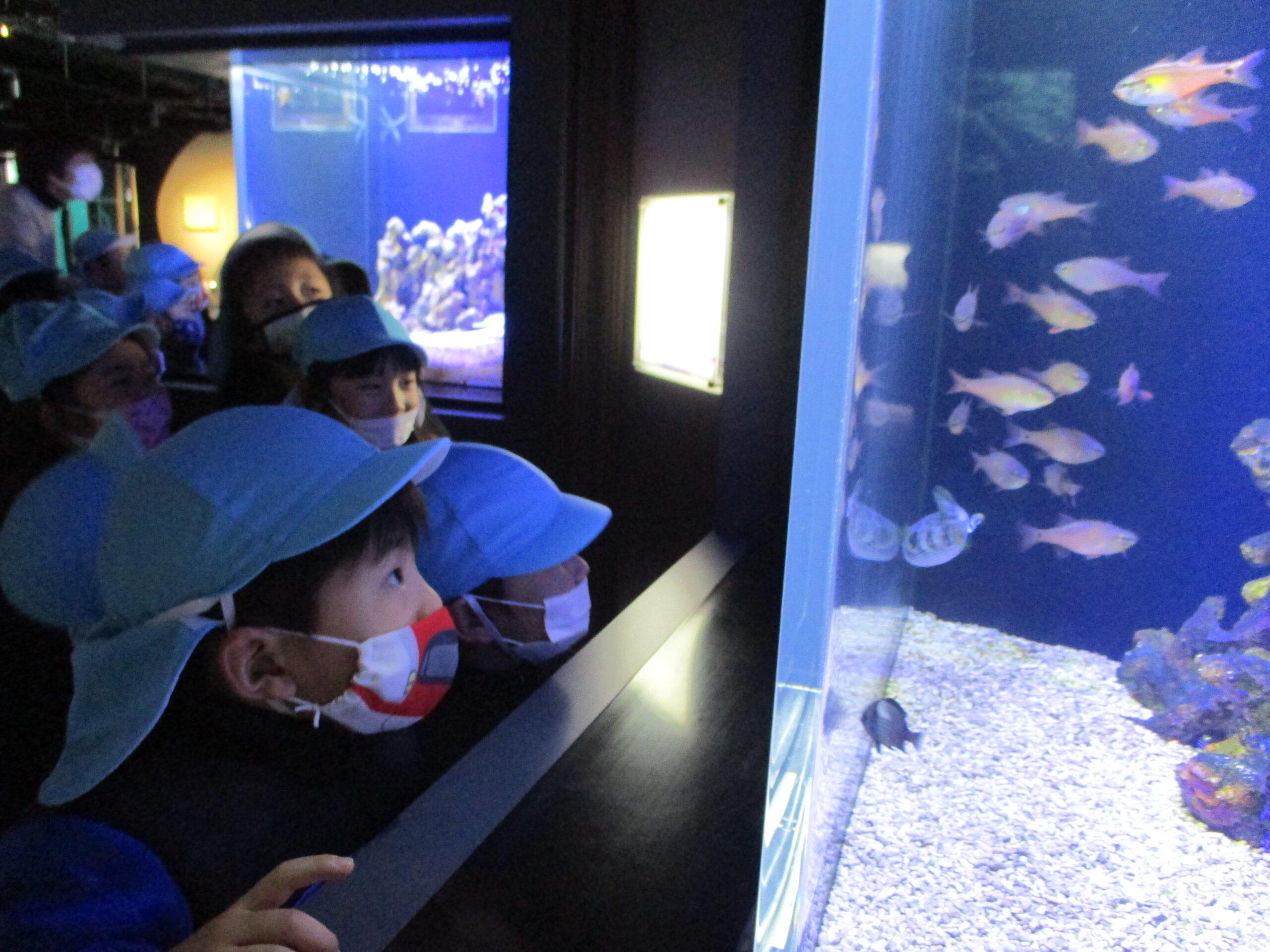 四国水族館に行ったよ♪