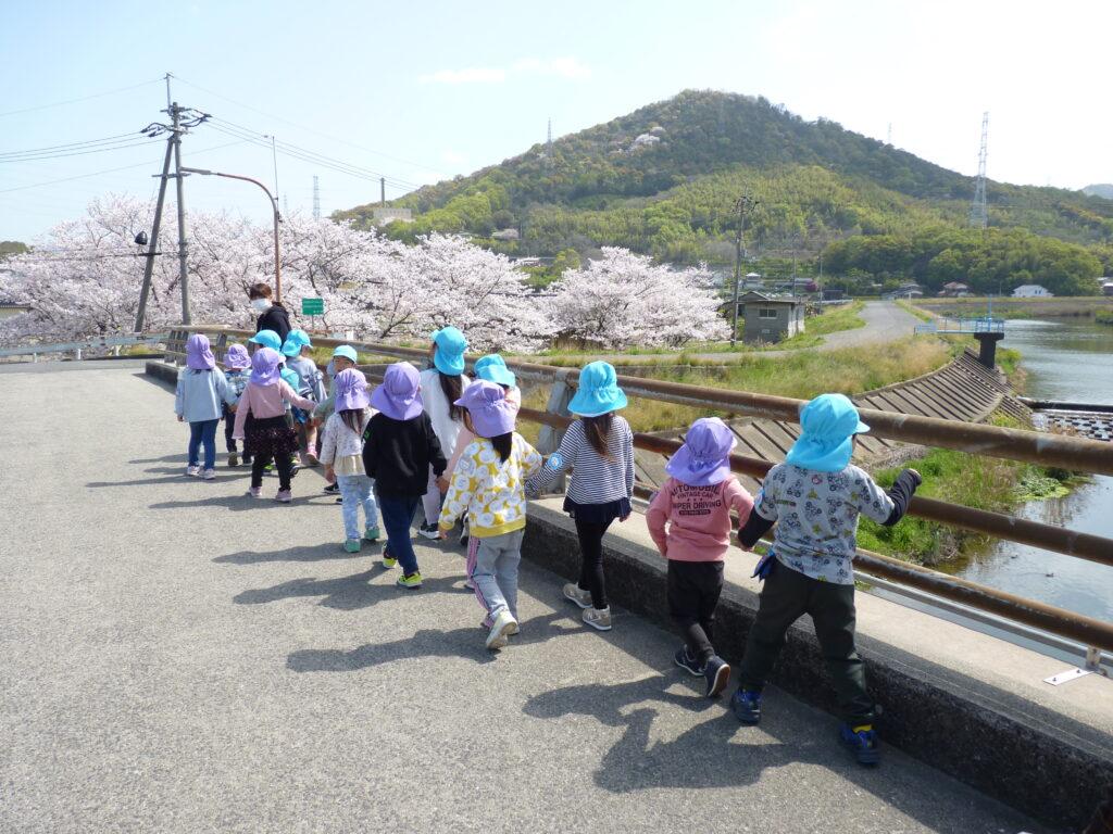 ぞうぐみさんと桜を見に行ったよ!天気が良くてお散歩日和だね♪