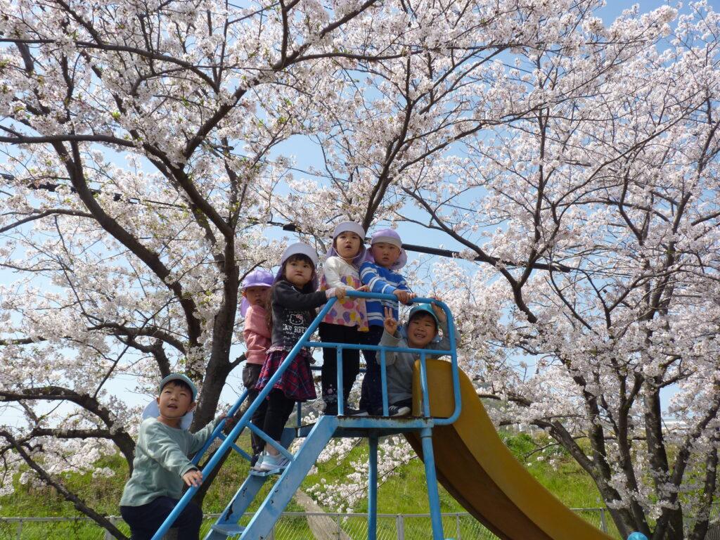 満開の桜の中でたくさん遊んだよ✿とってもきれいだね!