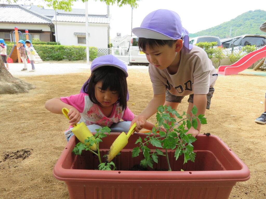 初めてみんなで野菜を植えました