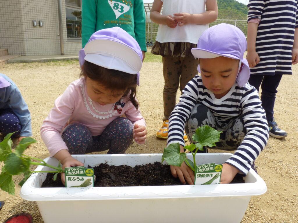 夏野菜の苗植えに挑戦!トマトにきゅうりになす 出来上がりがとっても楽しみだね☆