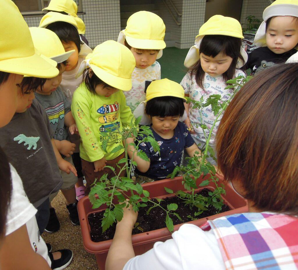 ミニトマトの苗を植えました!土がふかふかだね~☆